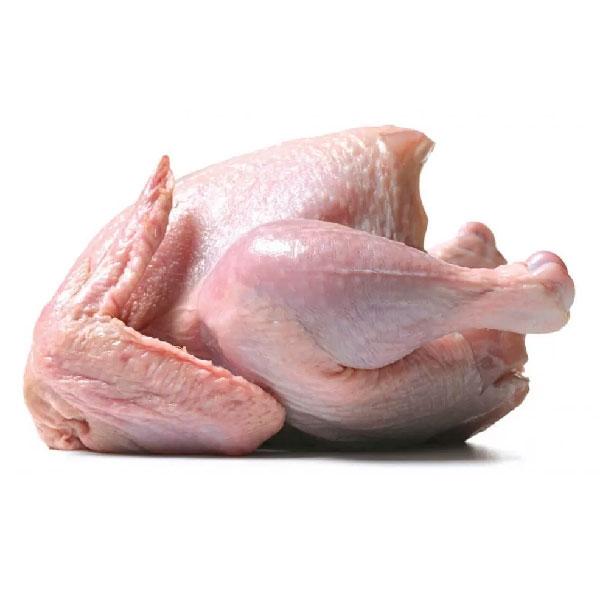 مرغ کامل